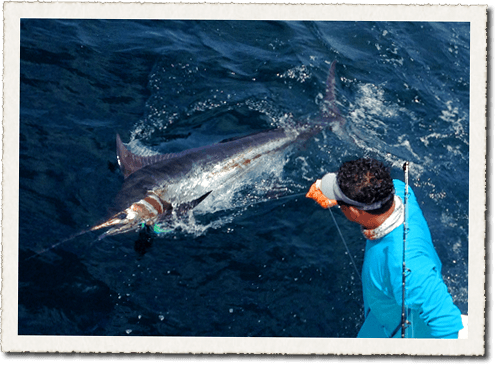 Fishing for Marlin in Costa Rica