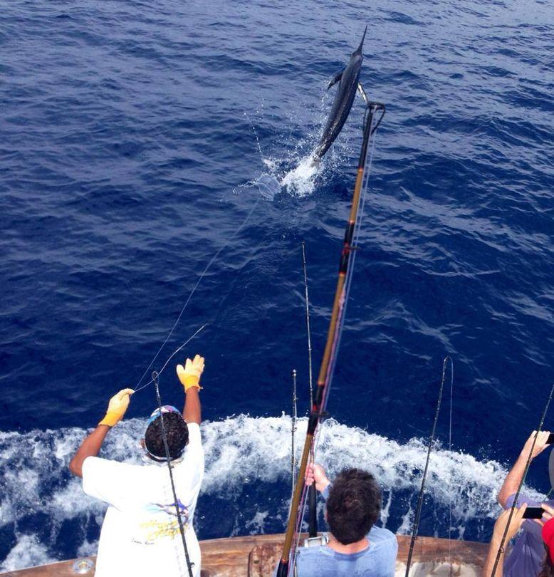 Peak sailfish season in jaco for Costa rica fishing season